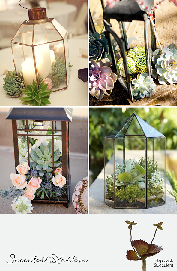 9 Ways To Decorate With Succulents For Weddings amp Events