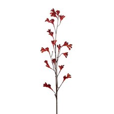 Kangaroo Paw Spray Red