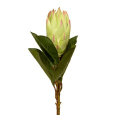Protea Open Large Green