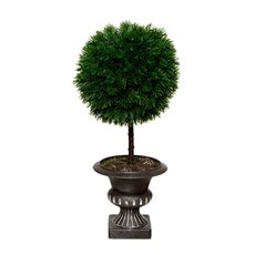 Evergreen Pine Topairy Tree Potted (1639cmH) Green