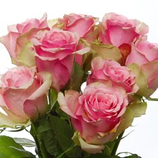 Imported Intermediate Fresh Rose Bunch 10 Belle Rose (40cm)