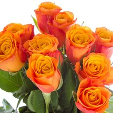 Imported Premium A Fresh Rose Bunched 10 Confidential (50cm)