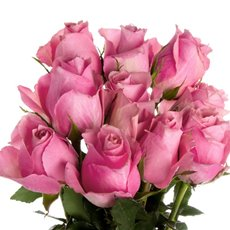 Imported Premium A Fresh Rose Bunched 10 Ace Pink (50cm)