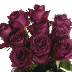 Imported Premium A Fresh Rose Bunched 10 Blue Berry (50cm)