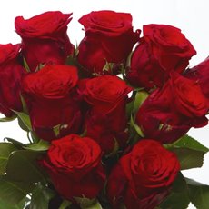 Imported Premium A Fresh Rose Bunched 10 Ever Red (50cm)