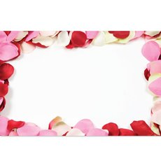 Cards Rose Petals Border PK50