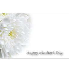 Cards Chrysanthemum White Happy Mothers day  PK50