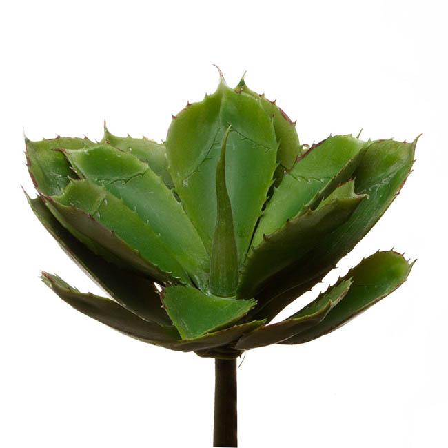succulent aloe vera grey green 22cmdx26cmh. Black Bedroom Furniture Sets. Home Design Ideas