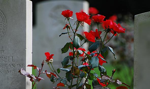 Roses as sympathy flowers