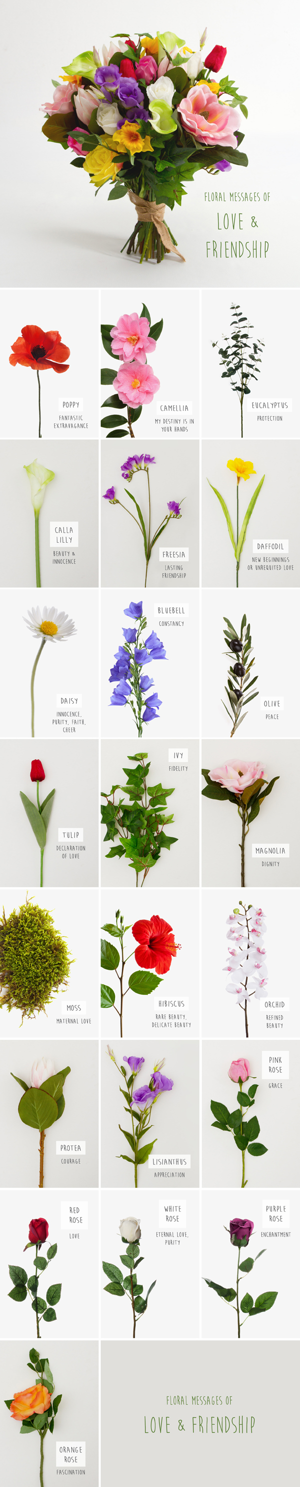 Floriography Chart of Flowers