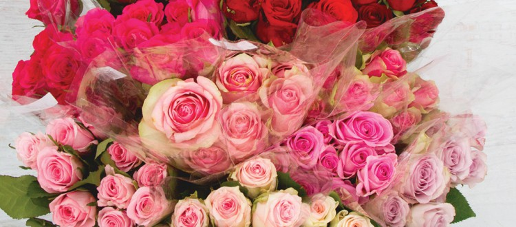 Meaning of Rose Colours - What does each colour rose mean?