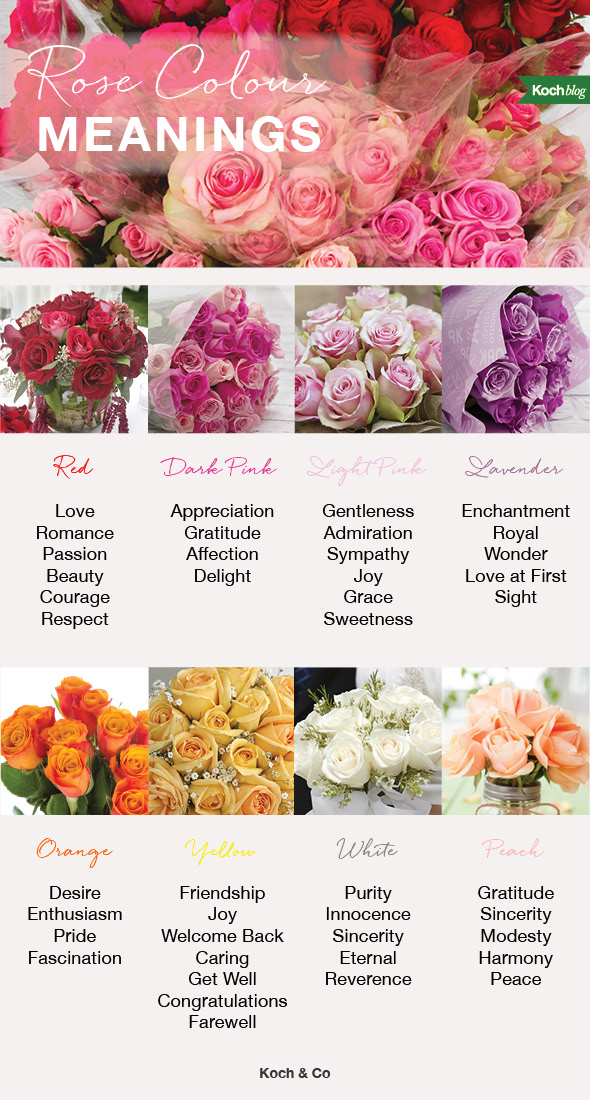 8 rose colour meanings the koch blog rose colour meanings mightylinksfo