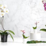 Potted Orchids – Real versus Fake and How to Care for Them.
