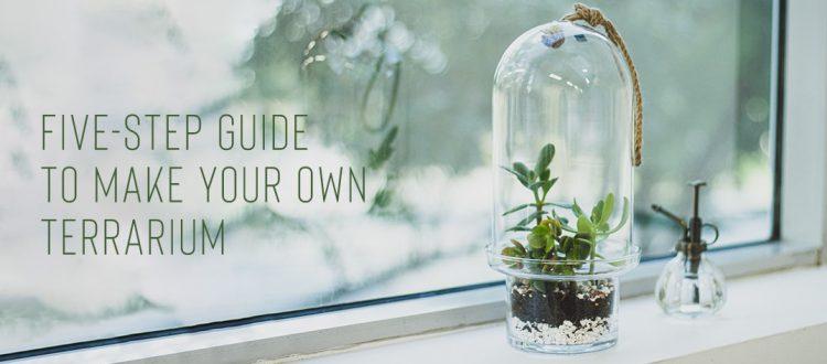 DIY Make Your Own Terrarium 2