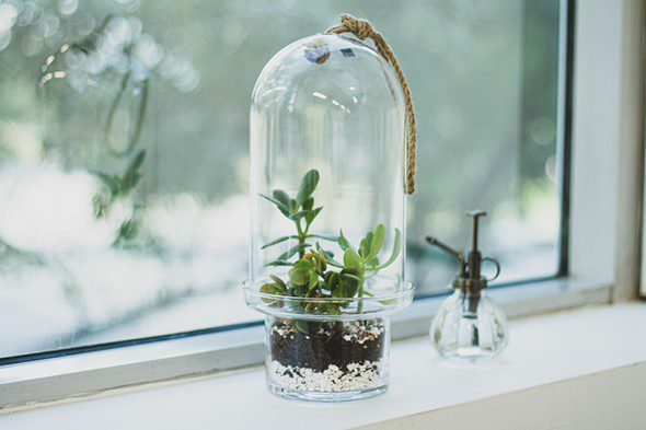 Make Your Own Terrarium - Final