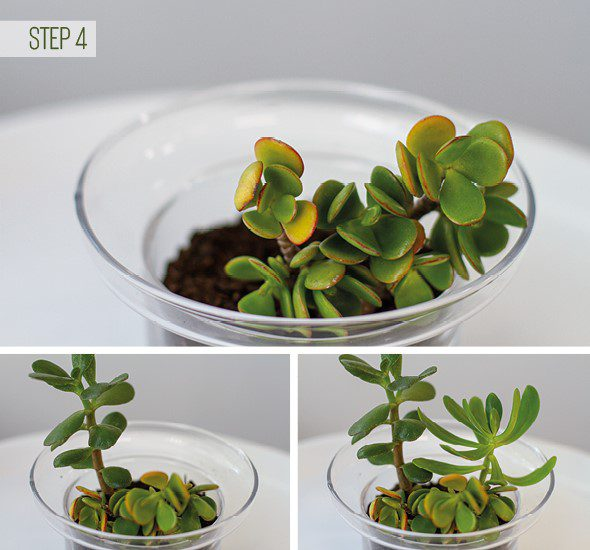 Make Your Own Terrarium - Step 4
