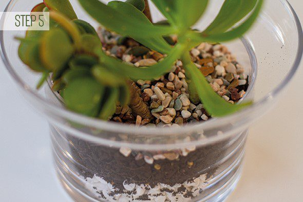 Make Your Own Terrarium - Step 5