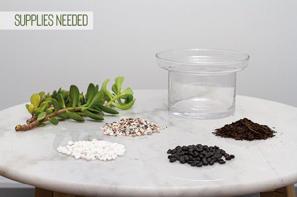 Make Your Own Terrarium - Supplies