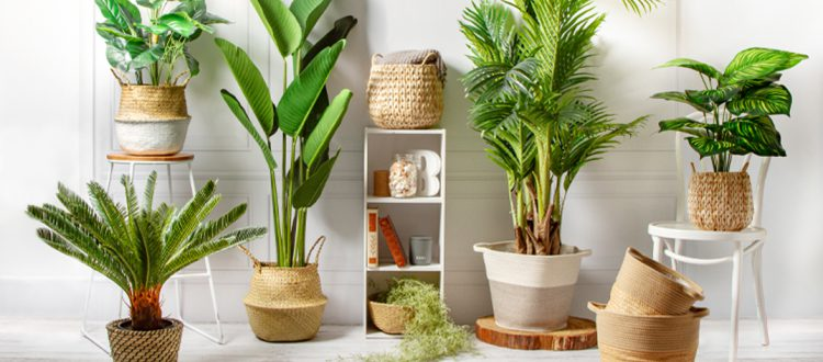 Indoor Plant Header Image