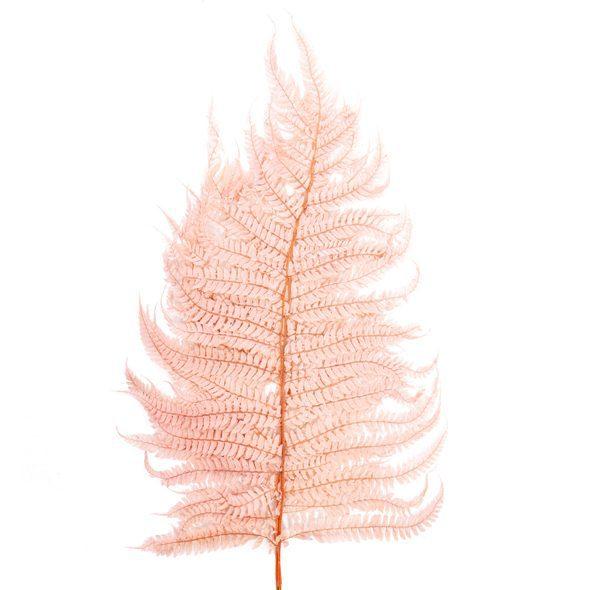 Preserved Dried Leatherleaf Fern in Soft Pink