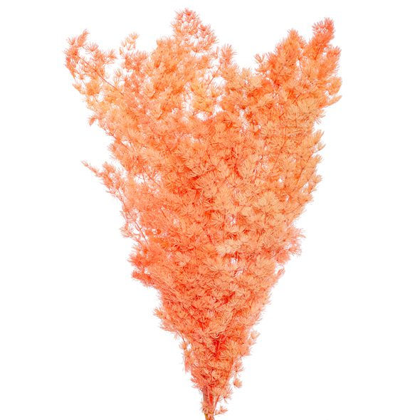 Preserved Dried Ming Fern in Salmon