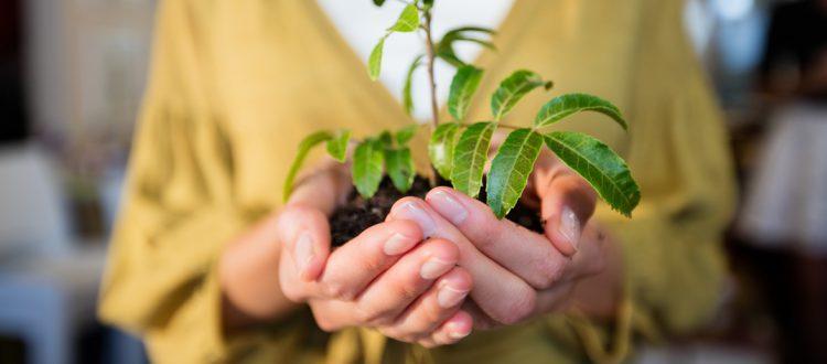 Sustainable Florist Blog header Final