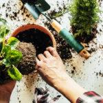 Plant Care Final Blog Header