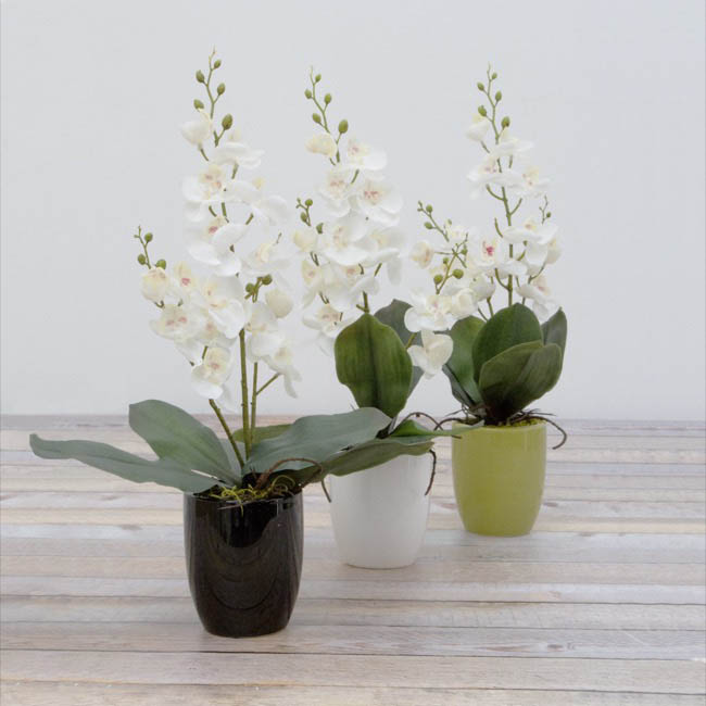 Ceramic Orchid Pot Small White (9.5cmDx11cmH)
