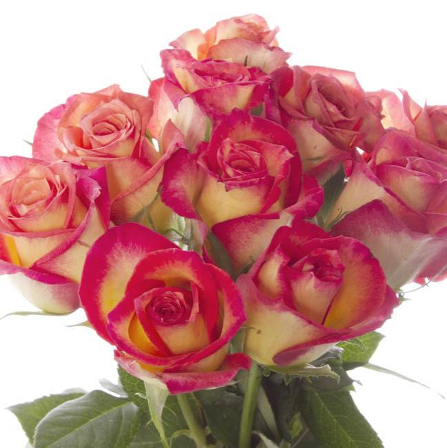 Buy Wholesale Fresh Flowers Online At Bulk Prices Koch