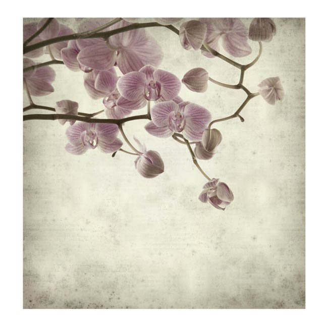 Cards Square Cherry Blossom Branch (10x10cm) Pack 50