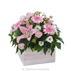 Interflora Softness Mixed Box Arrangement