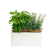 - Interflora Fresh Pot
