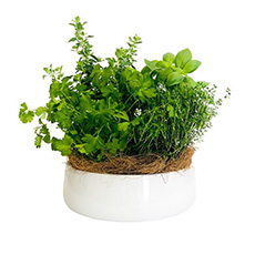 - Interflora Green Pot