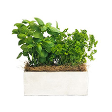 - Interflora Healthy Pot