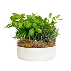 - Interflora Garden Fresh Pot