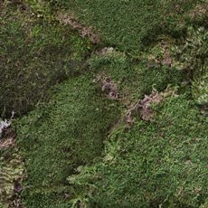 Sheet Moss Preserved Bulk Moss Dark Green 1.3kg