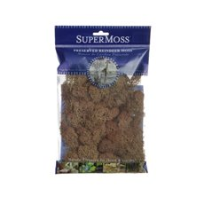 Reindeer Moss - Reindeer Moss Preserved Bag Rust Brown (55gm 2oz)