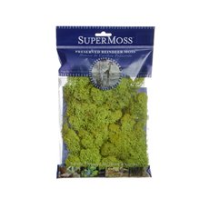 Reindeer Moss Preserved Bag Chartreuse (55gm 2oz)