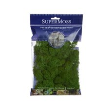 Reindeer Moss - Reindeer Moss Preserved Bag Forest Green (55gm 2oz)