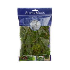 Reindeer Moss - Forest Moss Preserved Bag Moss Fresh Green (55gm 2oz)