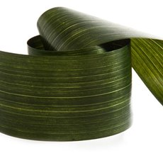 Aspidistra Decor Ribbons - Ribbon Tear Aspidistra Leaf Green (10cmx50m)
