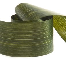 Aspidistra Decor Ribbons - Ribbon Tear Aspidistra Leaf Light Green (10cmx50m)