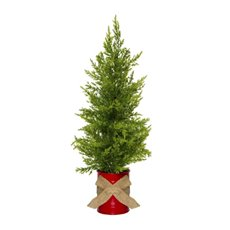Decorative Christmas Trees - Christmas Tree Cypress Pine Potted Red Tin (46cmH)