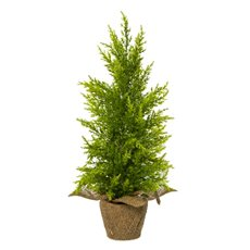 Decorative Christmas Trees - Christmas Tree Cypress Pine Potted Burlap Green (50cmH)