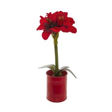 Christmas Flowers - Amaryllis Potted Red Tin Red (35cmH)