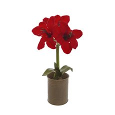 Christmas Flowers - Amaryllis Potted Beige Tin Red (35cmH)