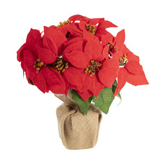 Christmas Flowers - Poinsettia Potted Burlap Wrapped 11 Flowers Red (43cmH)
