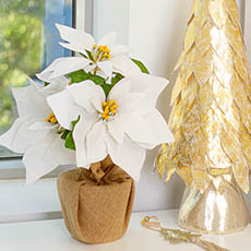 Christmas Flowers - Poinsettia Potted Burlap Wrapped 6 Flowers White (38cmH)
