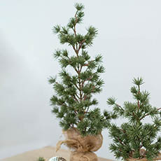 Tabletop Christmas Trees - Cedar Pine Burlap Wrapped Real Touch Green (55cmH)