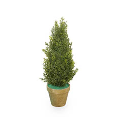 Tabletop Christmas Trees - Cypress Pine in Terracotta Pot Real Touch Green (40cmH)